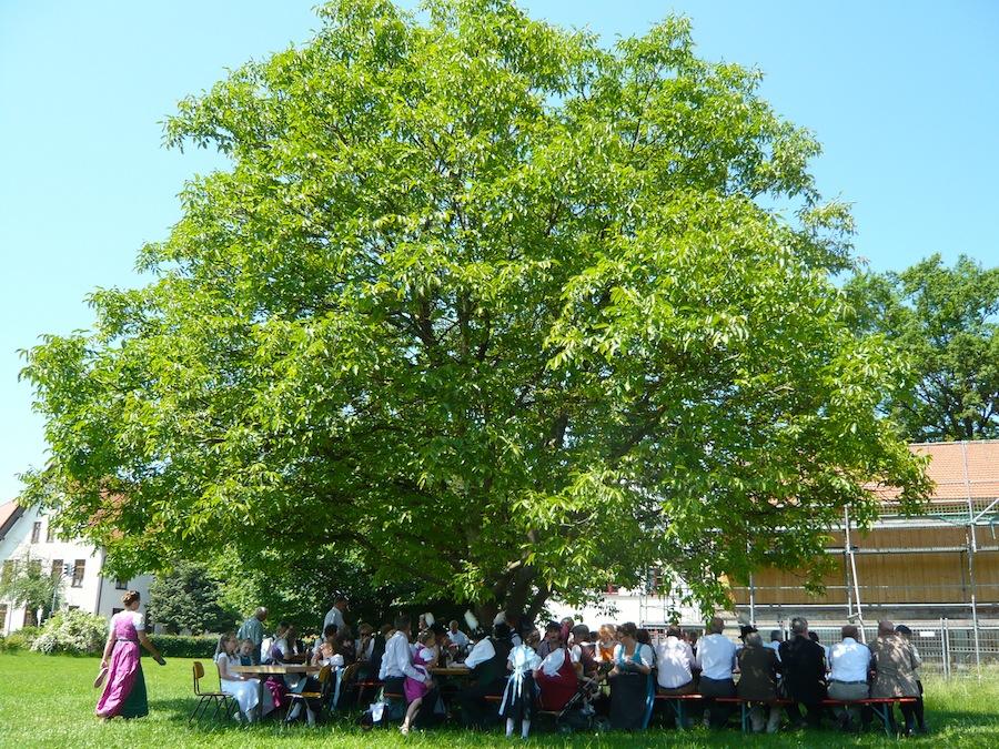 Fronleichnamsbrotzeit unterm Nussbaum